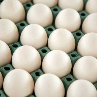 Van-beek-trading-eieren-wit